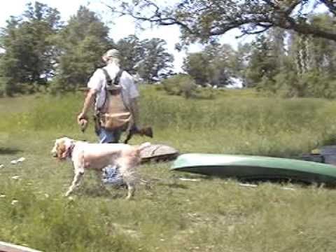 Autumn Breeze Kennel - Training A Spinone Italiano