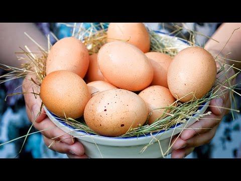 Всё о яйце: польза и вред, интересные факты