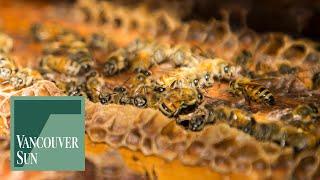 Medicinal honey produced at South Surrey farm gathers international awards | Vancouver Sun