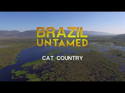 Brazil Untamed: Cat Country (2016) [Documentary]
