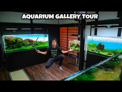 private-tour-inside-amazing-home-aquarium-gallery---breathtaking-ada-aquascaped-aquariums