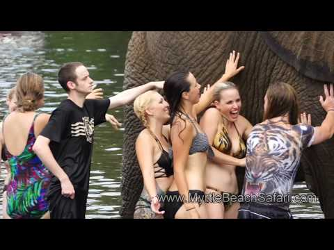 Bubbles the Elephant Loves to Swim