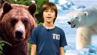 Урок №19 «Дикие животные»|Онлайн школа русского языка в помощь иностранным детям, изучающим русский