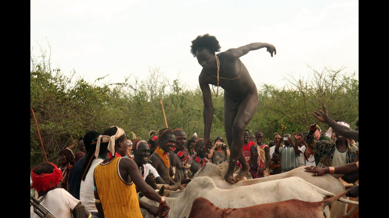 Image result for Bull jumping in Ethiopia