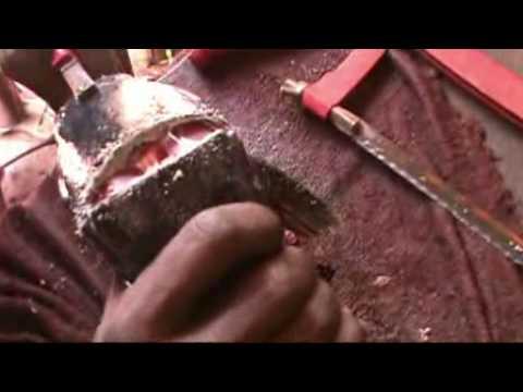 Preparation And Injection Of Hormonal Extract - Mwea Aquafish Farm/SARNISSA.mp4