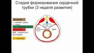 видео Развитие топографии (часть 2) - интернет магазин Дрели Org Москва