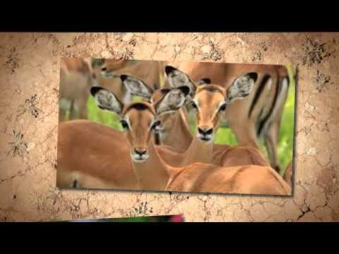 Tanzania National Parks Part 3| Tanzania Travel company