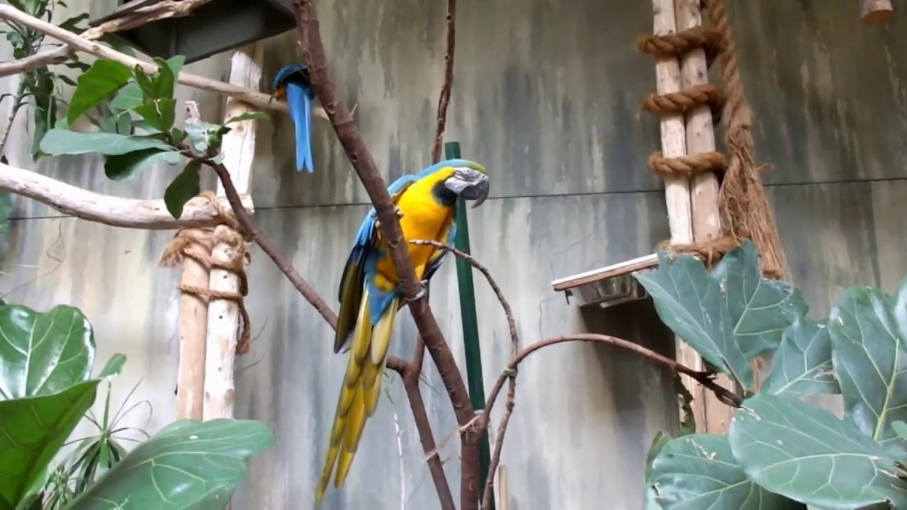 Parrots In The Main Aviary At The Bird Kingdom In Niagara Falls Canada Youtube