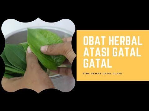 obat-herbal-gatal-gatal-dengan-daun-sirih---cara-membuatnya