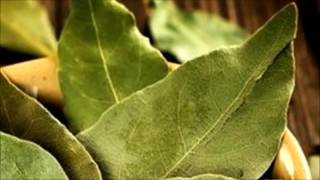 Defne yaprağı Çayının Faydaları