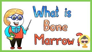 Casually explained: Bone Marrow (Type, Functions, Importance)