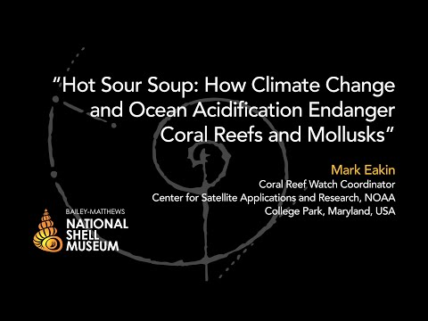 Mollusks in Peril — How Climate Change and Ocean Acidification Endanger Coral Reefs and Mollusks
