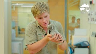 Robert's Wildlife Hospital Tour | Irwin Family Adventures