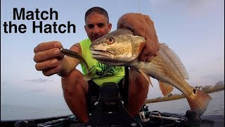 SHRIMP ARE MOVING | Match the Hatch with Strike King Rage Swimmer
