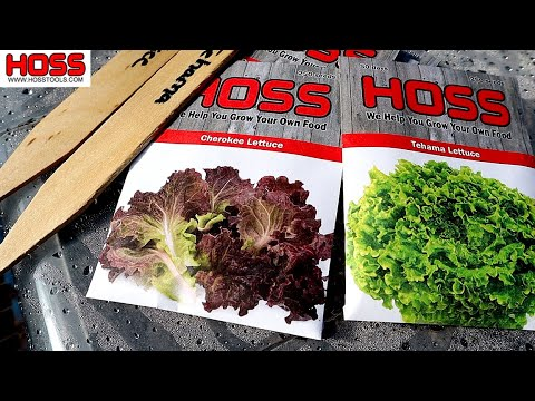 GROW BIG HEADS OF LETTUCE WITH THIS EASY TRICK!