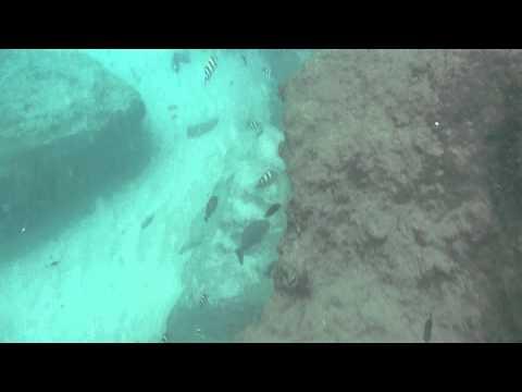 Currumbin Beach Snorkelling Feb 2014