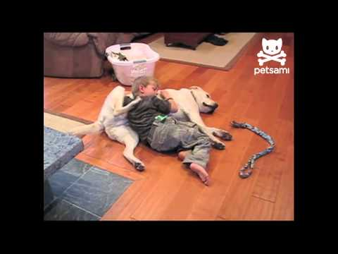 funny Video - Dog and kid Back-Scratching Teamwork