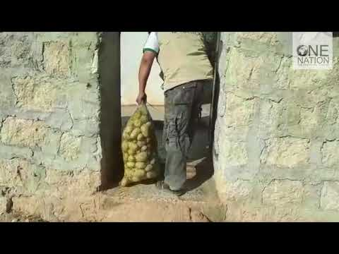 Potatoes Distribution in Aleppo, Syria - October 2017