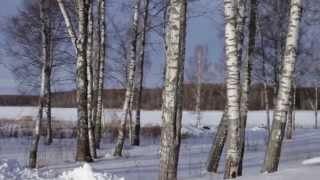 Берега Удачи - Участки на Волге у деревни Красное(Вид на участки у реки, будущий пляж в поселке