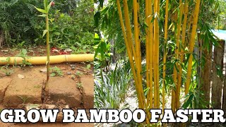 How To Grow Bamboo Faster