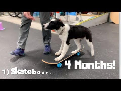 30 + Puppy Dog Tricks with Jade the Border Collie