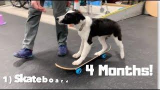 30 + Puppy Dog Tricks with Jade the Border Collie