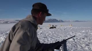 極北の海に生きる幻の一角獣「イッカク」。 特徴的な外見、そしてその姿...