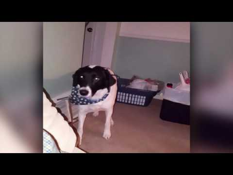 Guilty Dog Backs Out of Room