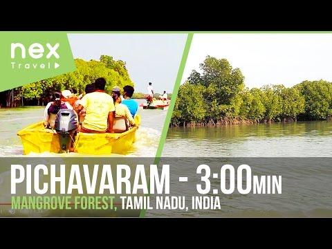 Pichavaram Mangrove Forest Tourist Place In Tamil Nadu, India