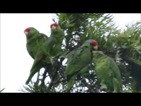 All Weather Parrots