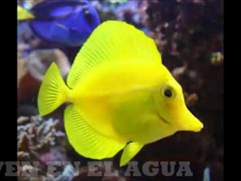 Animales vertebrados e invertebrados youtube for Modelos de estanques para peces