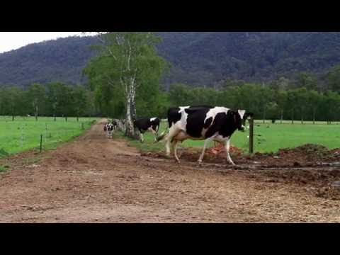 Pasture-based Automatic Milking Systems