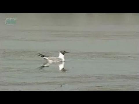 Пресный водоем. Птицы водоемов