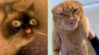 BEST CAT MEMES COMPILATION OF 2020 PART 34 (FUNNY CATS)