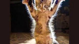 Los Mejores Vines de Gatos del 2015! Parte 2 Recopilación Gatos Graciosos