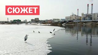 Утки и цапли прилетели на 202 микрорайон Якутска