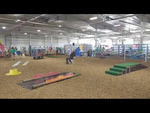 2018 Lancaster County Super Fair - 4-H Llama/Alpaca Show