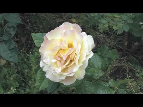 Guerilla Gardeners | Pilton Video | Streetwise Films