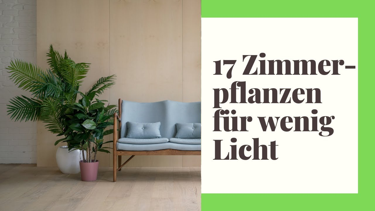 17 pflegeleichte Zimmerpflanzen für wenig Licht