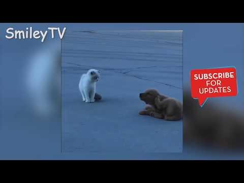 Cute animals -  Funny Cat & Dog Vines Videos 2019