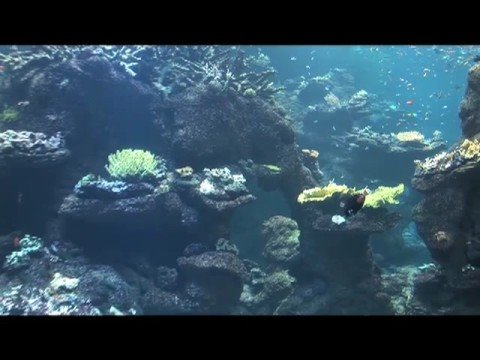 Wired Science 7: Creating a Coral Reef