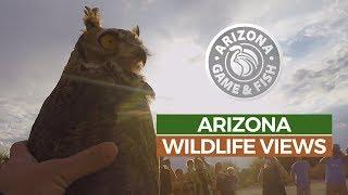 Episode 6 - 2018/2019 Arizona Wildlife Views Television