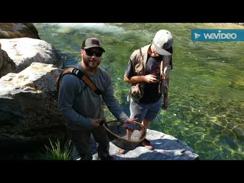 Fly Fishing North Fork Of The Yuba River