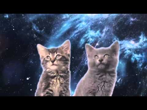 Space Cats — Magic Fly (1h)