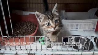 Судьба котенка спасенного из подземного плена  Help to make a kitten