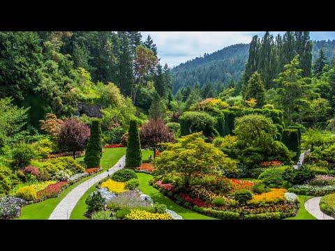 Lindos Jardins e Plantas Divina Mãe Natureza - Música Intrumental Suave