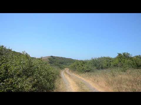 По дороге к Азовскому морю, трава типа ёлочка 1