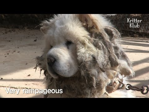 This Cute Dog Became Very Violent After Getting Abandoned Twice | Kritter Klub