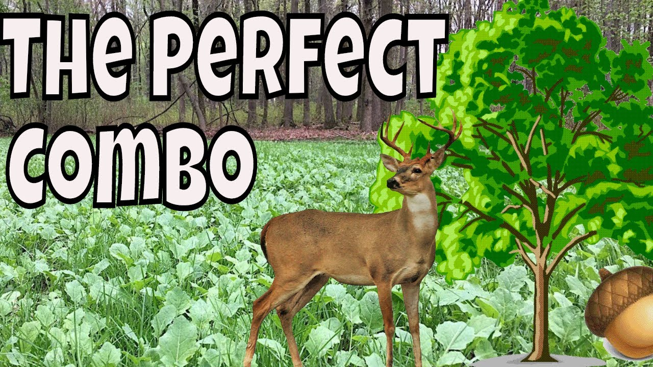 435aad9e7b709 Deer Hunting Over Small Food Plots For Deer | The Perfect Combo ...