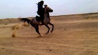 اسطورة الميدان الحصان طحان روعة المشاهد